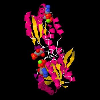 Struttura della fosfofruttochinasi e ruolo nella glicolisi in JSmol