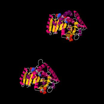 Enzimi oligomerici: Lattato Deidrogenasi LDH