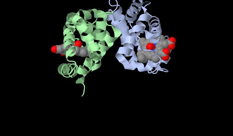 Struttura della mioglobina ed ossigeno legato