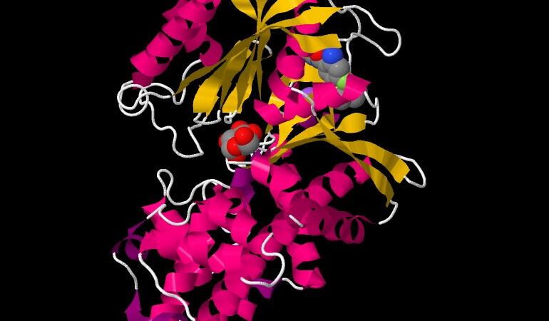 Glucochinasi: un enzima citoplasmatico del fegato