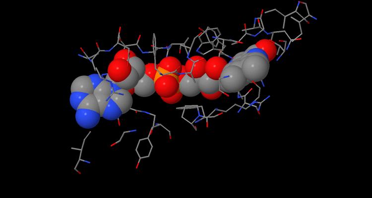 Il cofattore FAD ed il suo enzima in Jsmol
